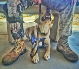 katie k9 training that clicks service dogs